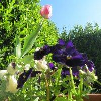 Весна!!!!!!!! :: Natasha Chevtchenko