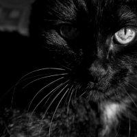 Черный кот :: Мила Борисова