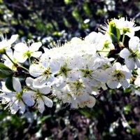 Растустившееся дерево :: Татьяна Королёва