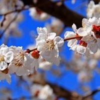 Весна :: Nataliya Oleinik