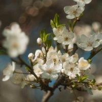 наконец весна :: Distortion57 Дударев