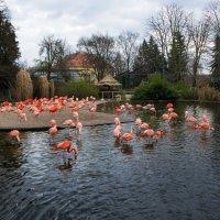 Красные фламинго :: Александр Лядов