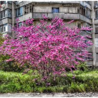 дерево там такое :: Sergey Bagach