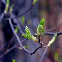 весна в расцвете :: Евгений Фролов