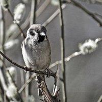 А птицам ведома ли грусть? :: Сергей В. Комаров