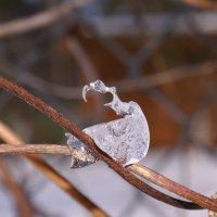 Страдания ледяного существа :: Alesha Lamkinson