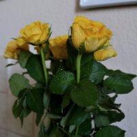 Розы :: Вероника Большакова