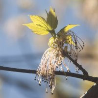 Весна :: Лидия Федорова