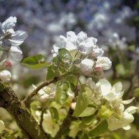 Весна :: Тарас Семигаленко