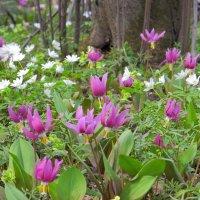 Дары весны :: Нина северянка