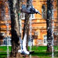 птицы :: Арсений Корицкий