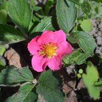 Мелкий розовый цветочек :: Юля