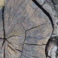 Морщинки у дерева :: Юля