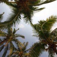Солнце, пальмы, небо. :: Evgenii Zlobin