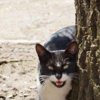 cat :: Кристина Урманова