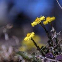 ...простые радости весны :: Сергей Долженко
