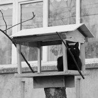 Коты прилетели.... :: Екатерина Краева