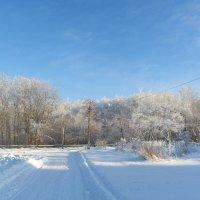 Зима 2014 Пущино :: Елена Китанина