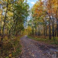 Осенний лес :: Vadim Piottukh