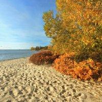 Осень на заливе :: Сергей Григорьев