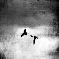 поверженный орел :: Natalya секрет