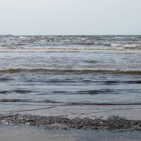 Финский залив :: Маера Урусова