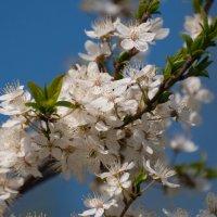 Аромат весны :: Марина Напылова