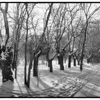зима :: Vitaliy Kononov