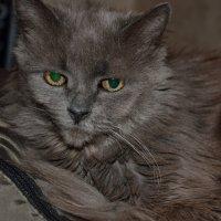 Кошка Мышка... :: Константин Сафронов