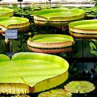 Kew :: Елизавета Ковалёва
