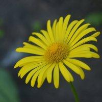 Чужие цветы сердцу дороже :: Юля