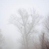 Туман :: Katrin Tararak