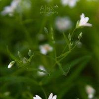 Spring curles :: Aleksandra Rastene