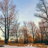 Зимние деревья в лучах заката :: Vadim Piottukh