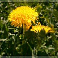 Весеннее солнышко :: Оксана Шалаева