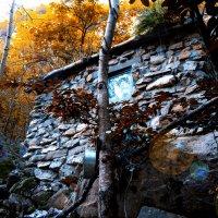 дом в лесу :: HelenaZ Z