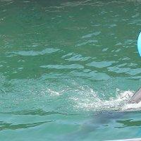 дельфинчик! :: Татьяна