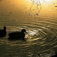 Круги на воде......... :: Olenka