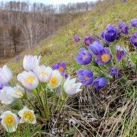 Два весенних букета. :: Наталья Юрова