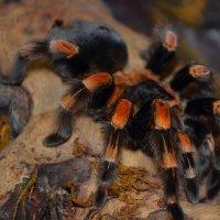 паук :: Катерина Забанова