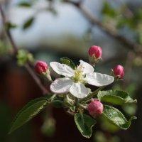 весна) :: Кристина Урманова