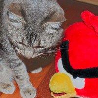 птицы атакуют :: Елена Милородова