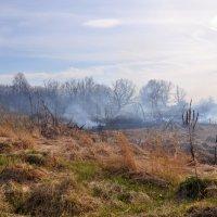 Лесной пожар :: Asya Piskunova