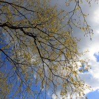 Вот и весна! :: Наталья Лунева