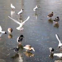 птицы :: Александр Малюгин