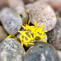 Нежные камни :: Елена Желнина