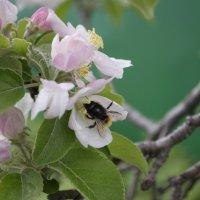 Сады цветут :: Дмитрий Линник