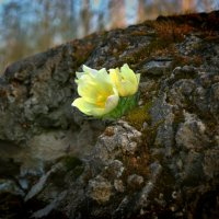 """И на камнях растут деревья... :: Sozidatel Online """"Евгений Щербаков"""""""