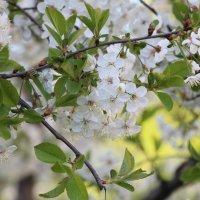 Весна :: Любовь Бутакова