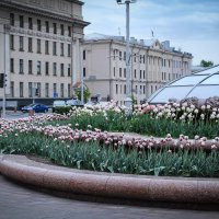 Тюльпаны, весна! :: Nonna